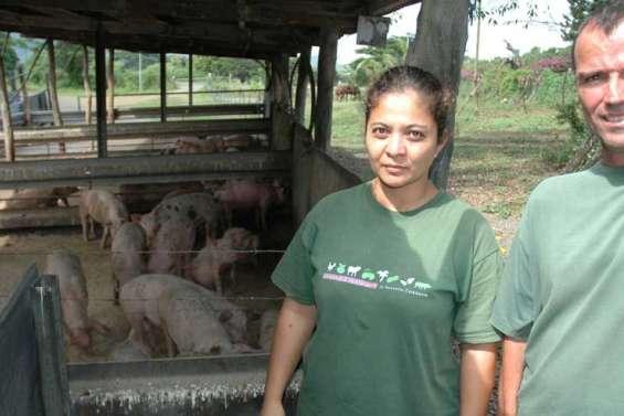Massacre de cochons à Voh