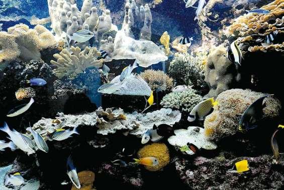 Plongeon dans les coulisses de l'Aquarium