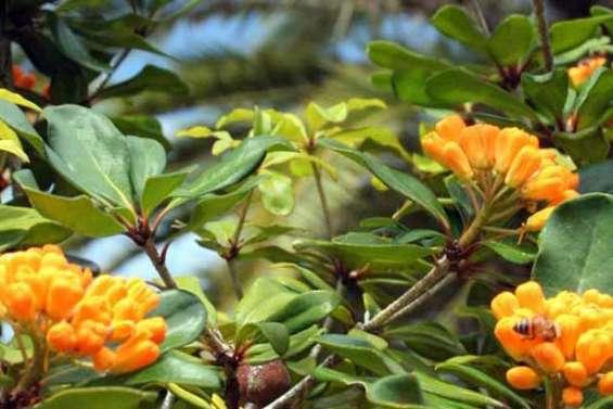 Soins intensifs pour plantes rares