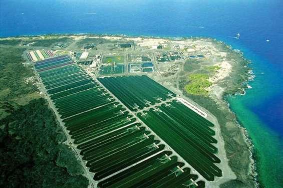 Micro-algues, mais macro-intérêt économique