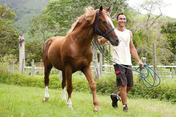 Eleveur de chevaux, une chère passion