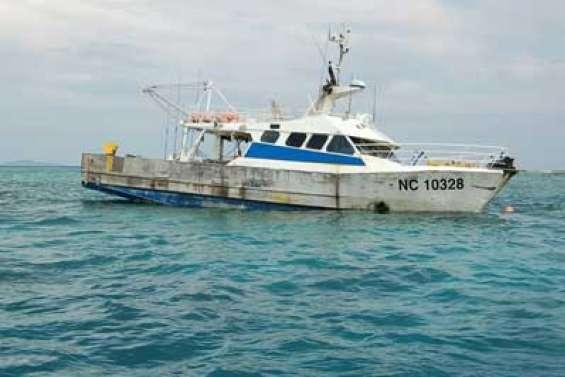 Requins : baignade interdite à Koumac