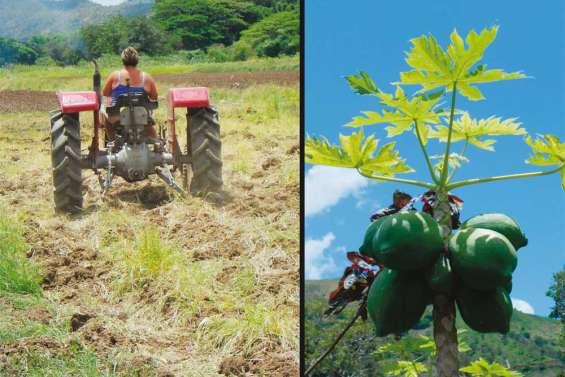 Une Calédonie sans OGM ?