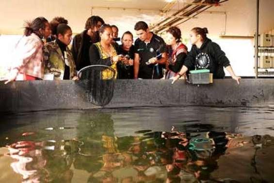 Ils surfent sur l'aquaculture