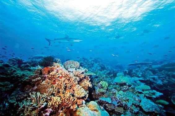 Le récif corallien de Bourail et de la zone côtière Ouest est en bonne santé
