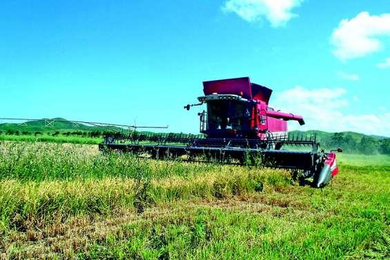 La Calédonie relance  la filière de riz local