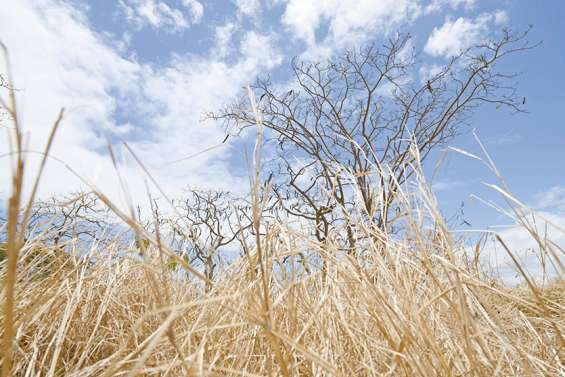 Bilan météo 2019 : peu de pluie et beaucoup de vent