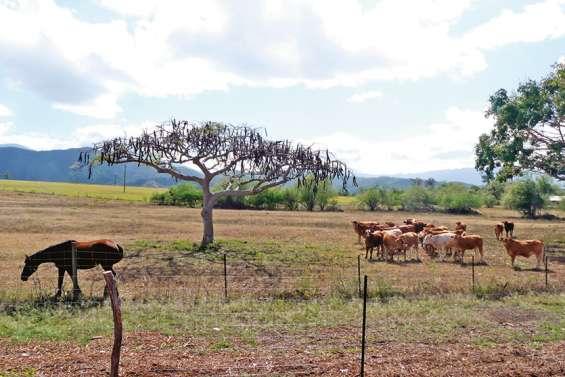 Une forte sécheresse est-elle à craindre ?