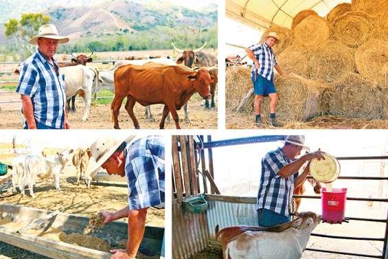 Sécheresse : l'angoisse du monde agricole