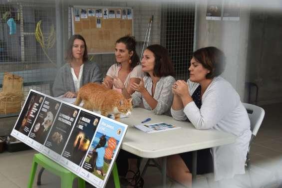Un avant-projet de loi du pays pour améliorer le bien-être animal
