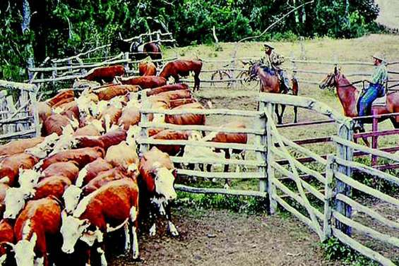 La vie des stations d'élevage, de 1860 à nos jours