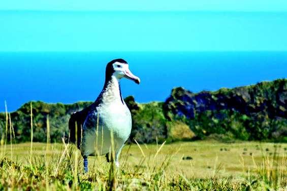 Terres et mers australes au patrimoine de l'Unesco