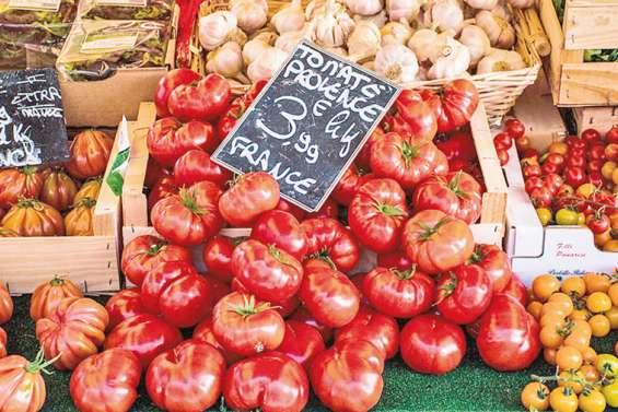 Un virus menace la filière tomate