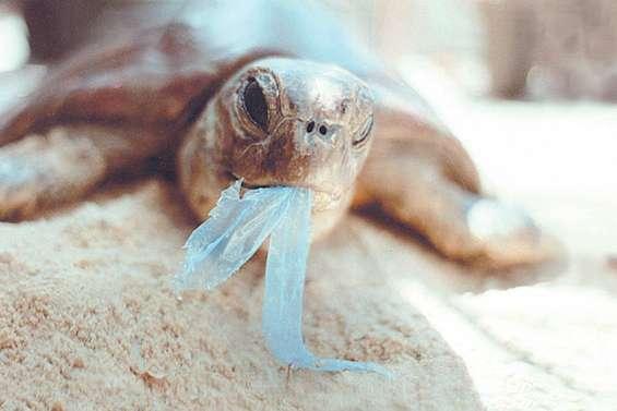 Les sacs en plastique interdits au 1er février