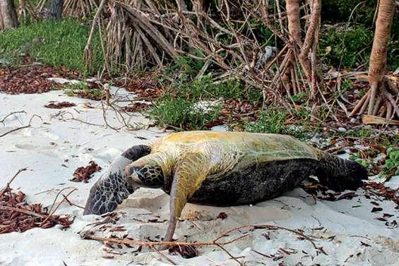 Condamné pour pêche et revente de tortues