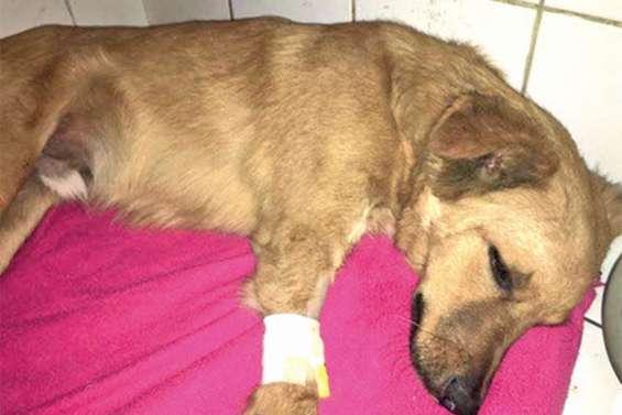 Violences sur animal : interpellé pour avoir« déliré » avec un chien