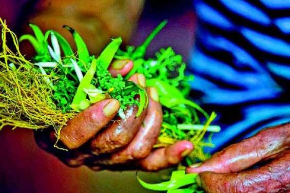 Punaauia : un colloque international sur la biodiversité végétale