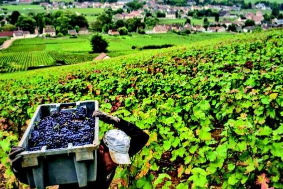 Vins de Bourgogne : la promesse des accords de libre-échange signés par l'UE