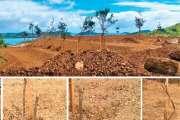 Les arbres de Partages en herbe sabrés à Koucokweta