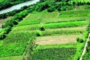 La loi sur les baux ruraux approuvée à Paris