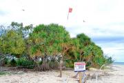 La plus grande colonie de sternes de dougall détruite à cause de plaisanciers