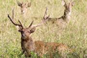 Un motard percute un cerf à Dumbéa