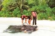 Pêche : pourquoi les DCP envahissent les zones côtières