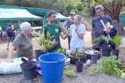 Nouméa : conseilset nouveautés font germer les idéesà la 3e Fête de l'agriculture urbaine