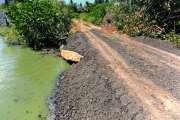 Une lagune bouchée dans la mangrove fait mourir des palétuviers