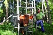 La campagne d'insémination artificielle bovine a débuté