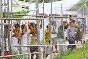 Des centaines de détenus s'évadent en Papouasie après des émeutes