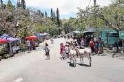 Les ânes ont égayé le marché