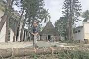 L'abattage des sapins et des cocotiers du musée a dû être arrêté hier matin