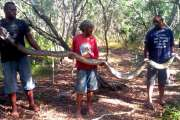 [VIDÉO] Un serpent de 4 mètres de long tué près de la tribu de Tiéta