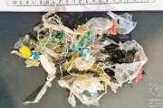 Dans l'estomac d'une tortue, des dizaines de bouts de plastiques