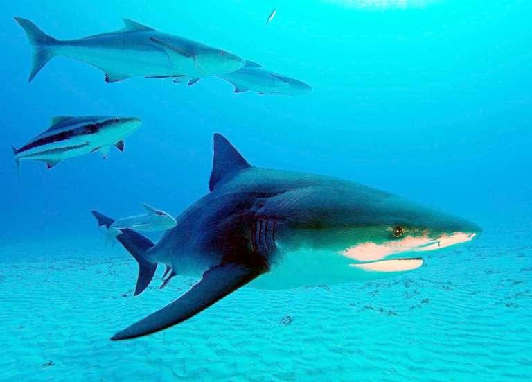 Comment sauver quelqu'un d'une morsure de requin