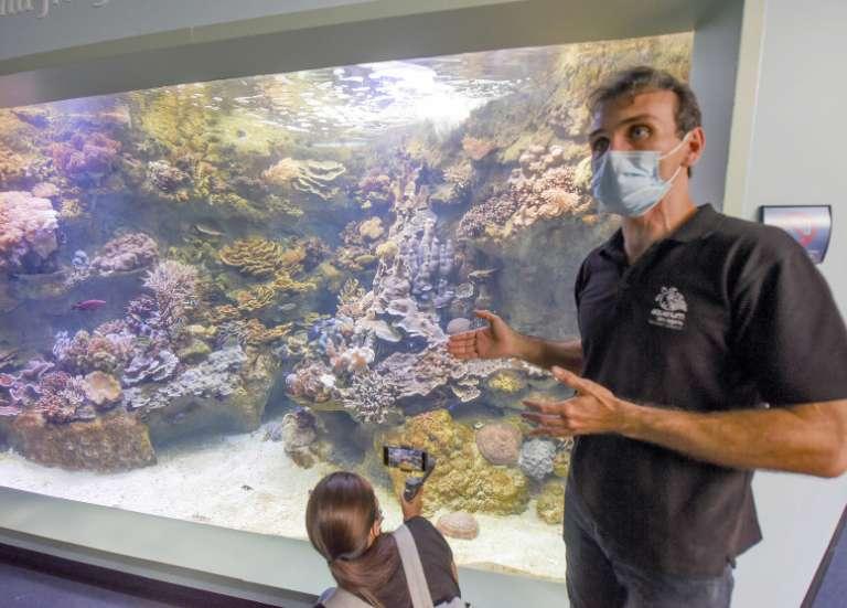 [VIDÉO] Les curiosités de l'Aquarium des Lagons seront de nouveau visibles vendredi