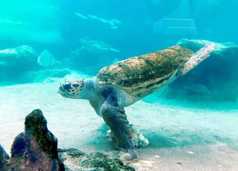 [GROS PLAN] L'aquarium des Lagons est fin prêt à rouvrir avec de belles surprises